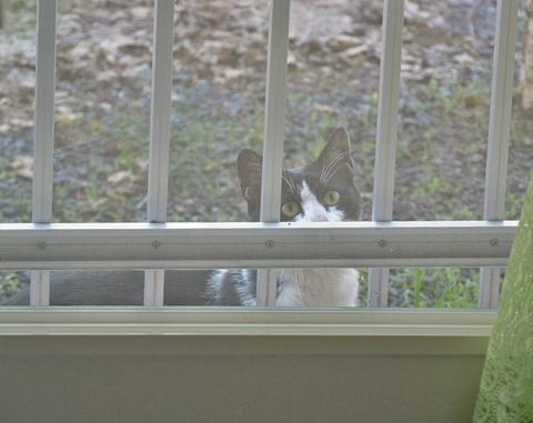 白猫たちとポピデジとチュンたち 012