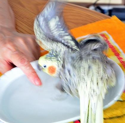 きげんよく羽をひろげはじめる