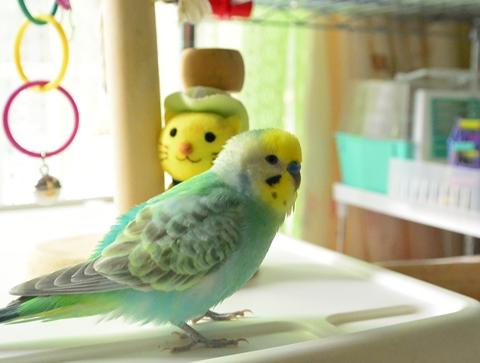 たくらむ鳥