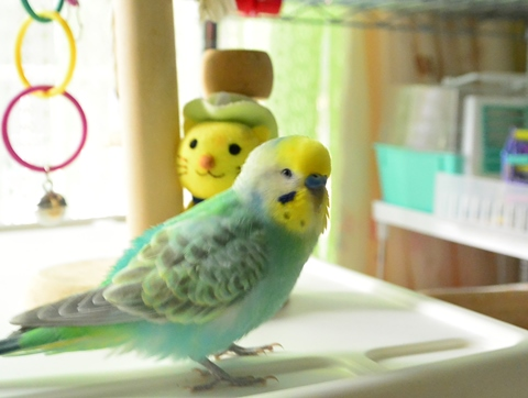 たくらむ鳥2