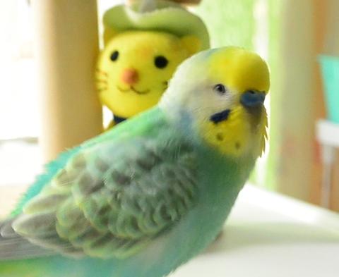 たくらむ鳥2-2アップリサイズ