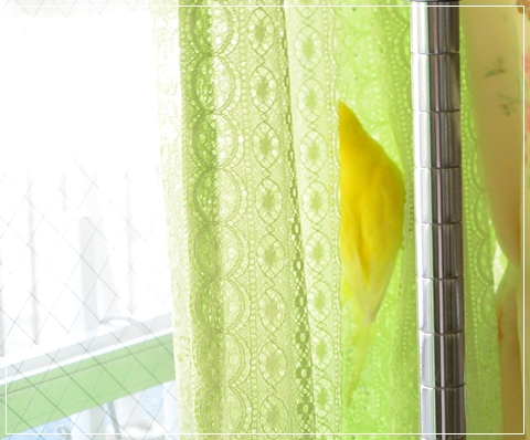 ぽぴカーテン筋トレ2-2