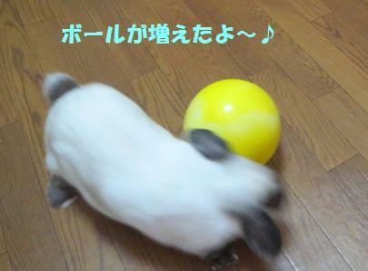 sakura 20140607