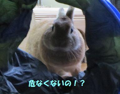 pig 20140628