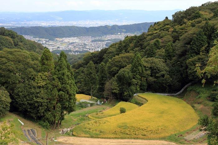 生駒山 小さな秋2