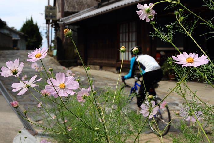 生駒山 小さな秋3