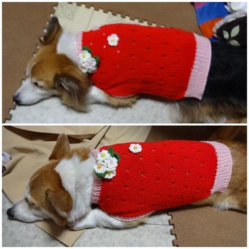 201403 新しいセーター