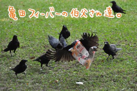 20140923-名城公園+-+132_convert_20140925163738