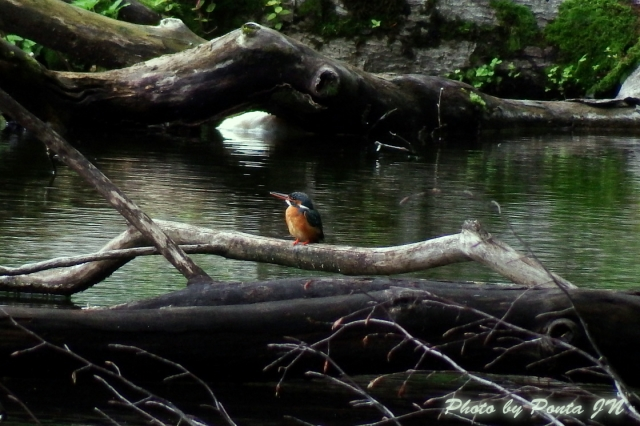 bird1406-0002.jpg