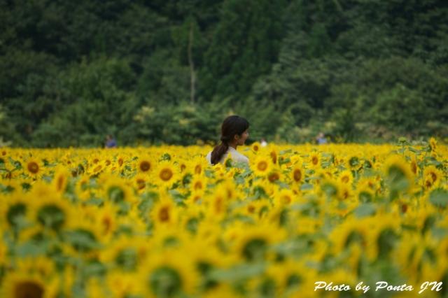 himawari1408-0007.jpg