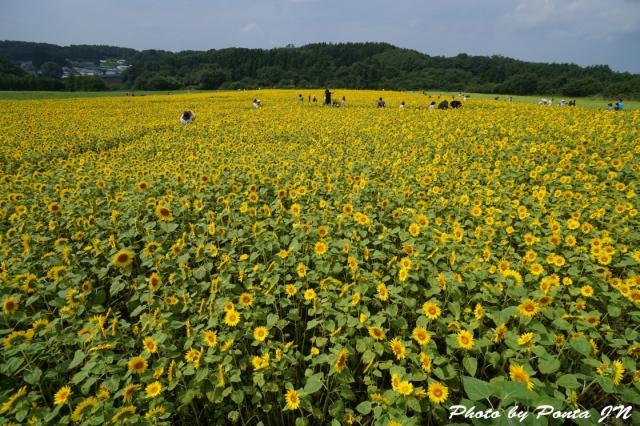 himawari1408-0028.jpg