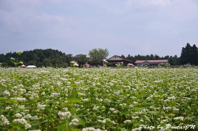 himawari1408-0030.jpg