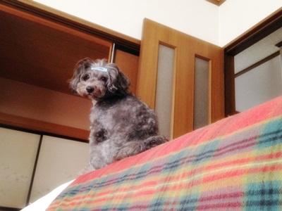 azuki0926d.jpg
