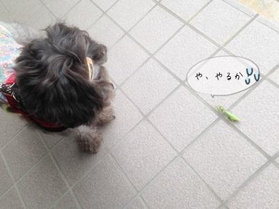 azuki1019aa.jpg