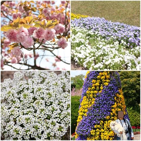 その他の花