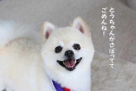 20140615-IMG_8632.jpg