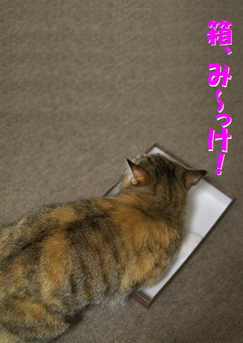 blog箱入り娘(その①)-2