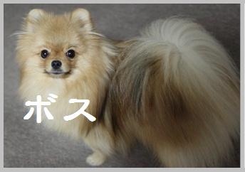 blog大陽にほえろ-2