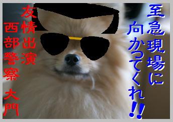 blog大陽にほえろ-8