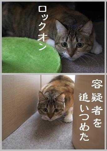 blog大陽にほえろ-9
