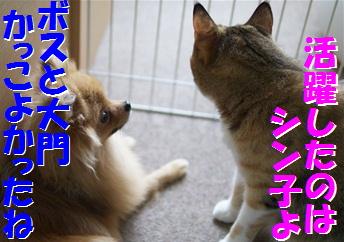 blog大陽にほえろ-12