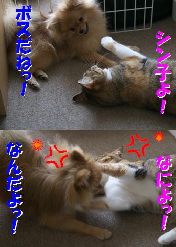 blog大陽にほえろ-13