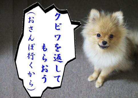 blog北斗の犬3e