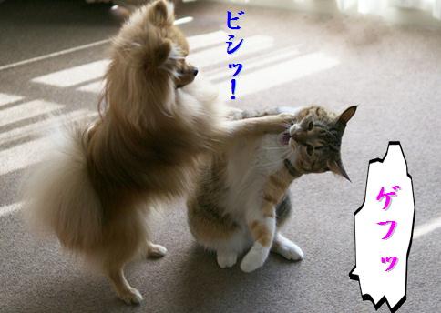 blog北斗の犬4e