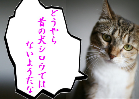 blog北斗の犬5e
