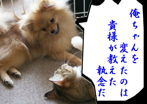 blog北斗の犬6e-2