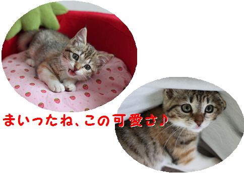 blogおめでとう 真寿ちゃん-1