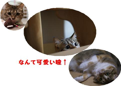 blogおめでとう 真寿ちゃん-2