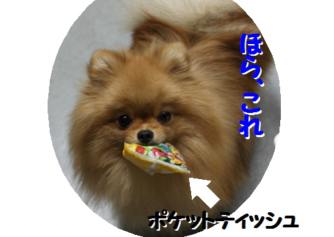 blogおめでとう 真寿ちゃん-5