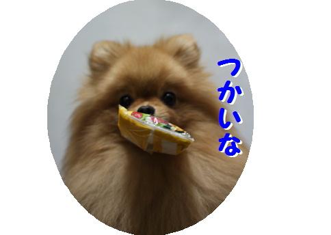 blogおめでとう 真寿ちゃん-6