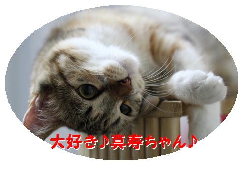 blogおめでとう 真寿ちゃん-7