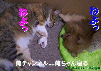blog大陽にほえろ-14-3