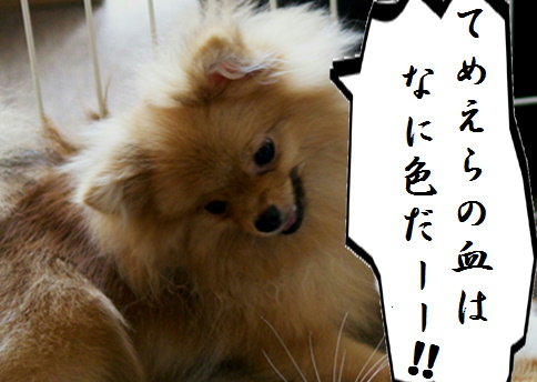 blog北斗-10