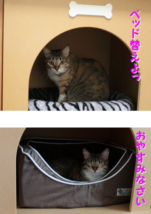 blog俺ちゃんハウス8-2