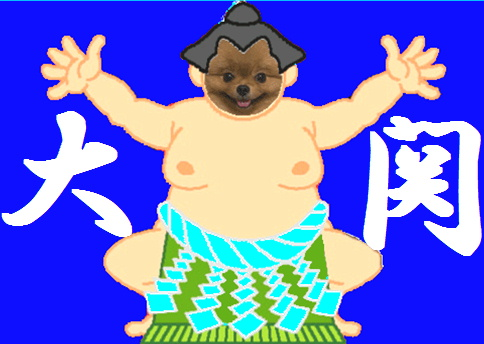 blog犬猫相撲2