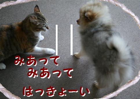 blog犬猫相撲4