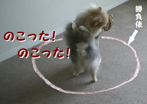blog犬猫相撲5