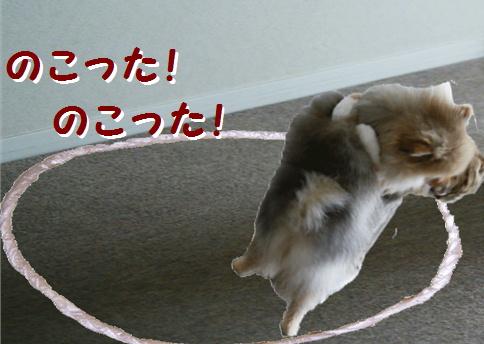 blog犬猫相撲6