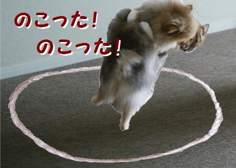 blog犬猫相撲7