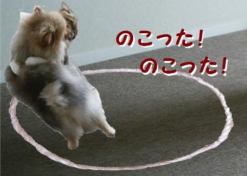 blog犬猫相撲8