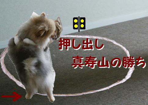 blog犬猫相撲9