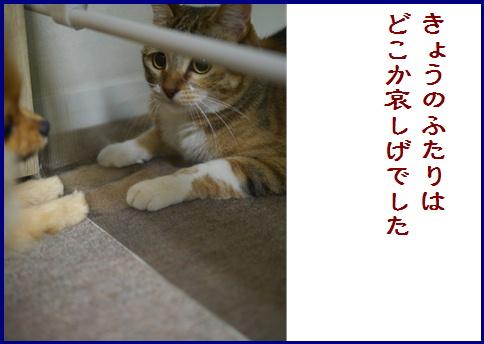 blogある愛の詩-4
