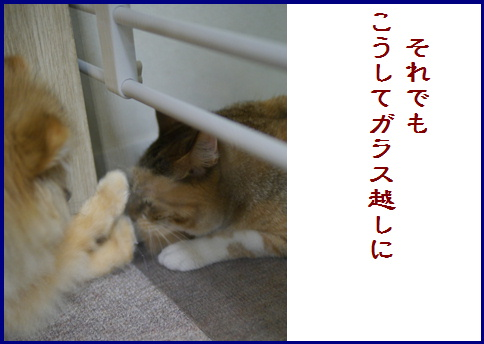 blogある愛の詩-5