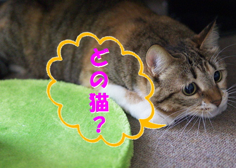 blogズッコケ伝説1