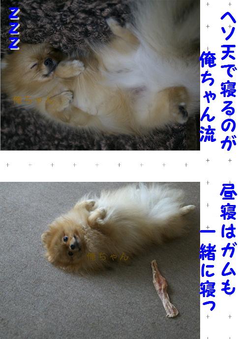 blog可愛いポメ俺ちゃん流4