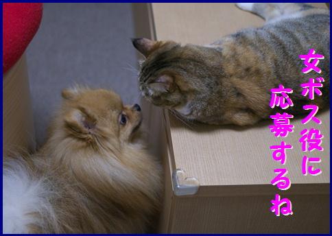 blog女優4b